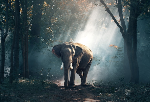 Elephants in the forest Premium Photo