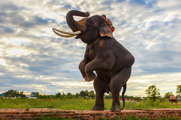 Elephants and old stupa at ayutthaya province in thailand Premium Photo
