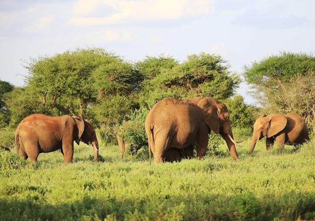Elefanti in piedi uno accanto all'altro su un campo verde in kenya, africa Foto Gratuite