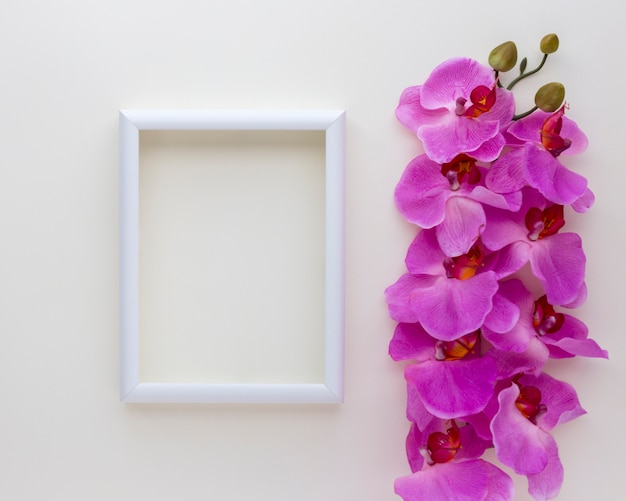 Elevated view of blank photo frame with pink orchid flowers above white backdrop Free Photo