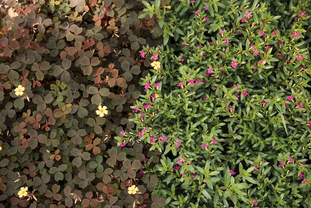 Elevated view of blooming yellow and pink flowers Free Photo