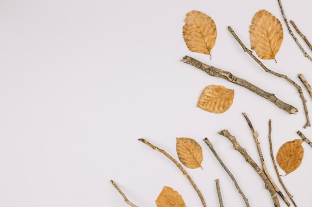 An elevated view of dry leaves and twigs isolated on white background with copy space for text Free Photo