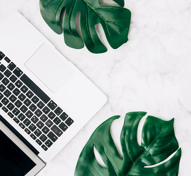 An elevated view of green monstera leaves with laptop on white desk Free Photo