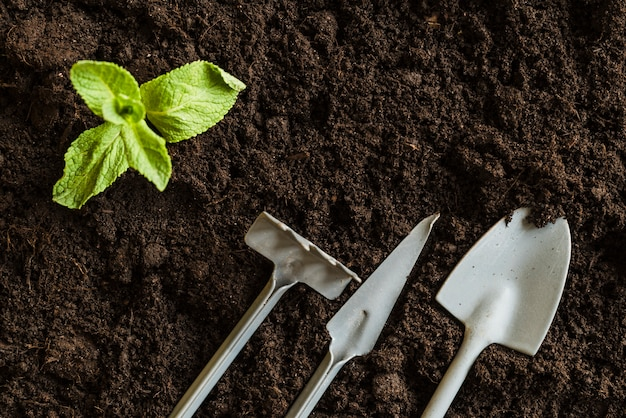 An elevated view of mint plant and gardening tools over the fertile soil Free Photo