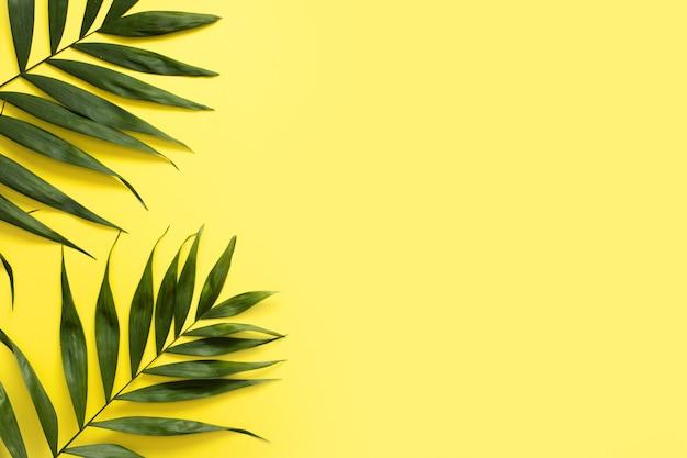 黄色の背景に新鮮なヤシの葉の立面図 Premium写真