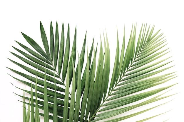 흰색 배경 위에 녹색 야자 잎의 높은보기 프리미엄 사진