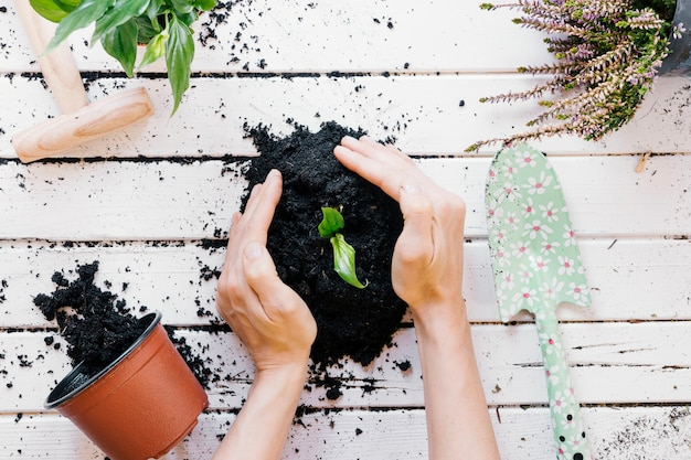Elevated view of person's hand seedling plant on wooden desk with gardening equipments Free Photo