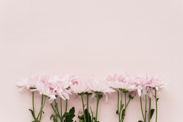 Elevated view of pink flowers on colored background Free Photo