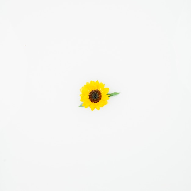Elevated View Of Single Yellow Flower On White Background Photo