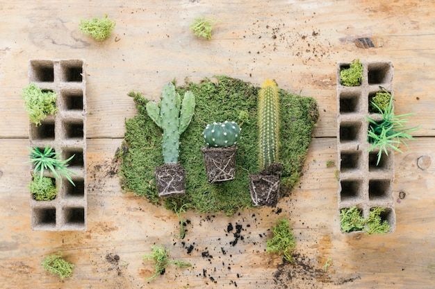 Elevated view of succulent plant on turf with peat pot tray on wooden desk Free Photo