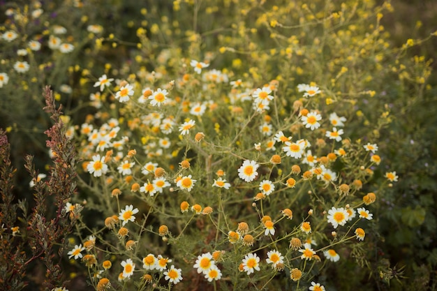 An elevated view of wild flowers Free Photo