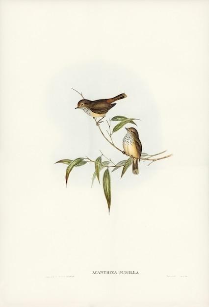 Elizabeth gouldによって描かれたリトルブラウンacanthiza(acanthiza pusilla) 無料写真