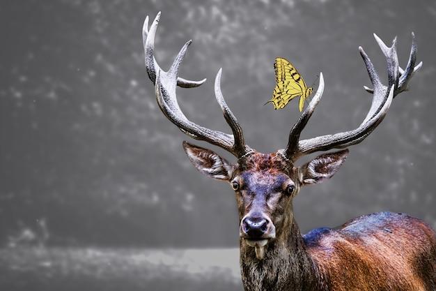 Голова лося и желтая бабочка на ней Бесплатные Фотографии