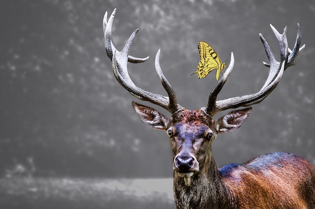 Elk head and a yellow butterfly on it Free Photo