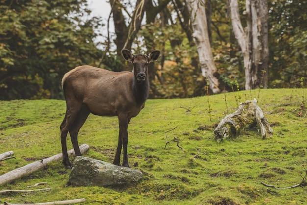 草が茂った丘の上に立っているエルク 無料写真