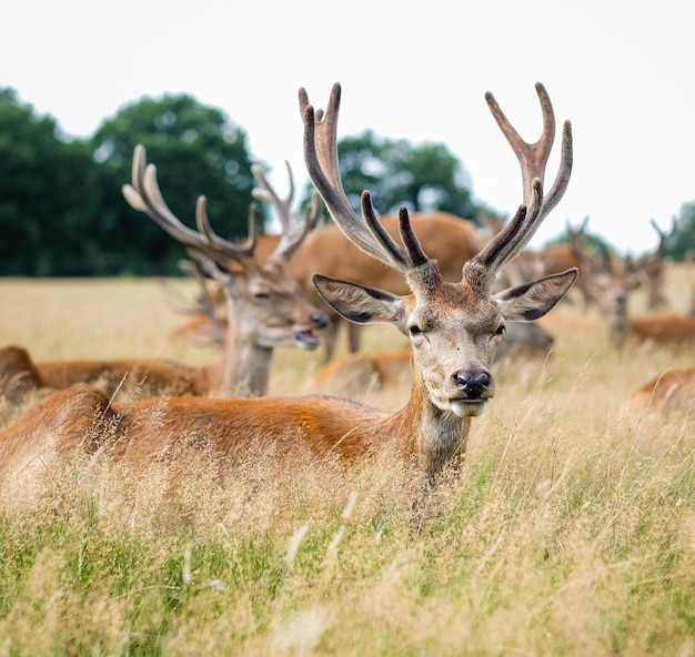 Elks standing on a field surrounded by grass Free Photo