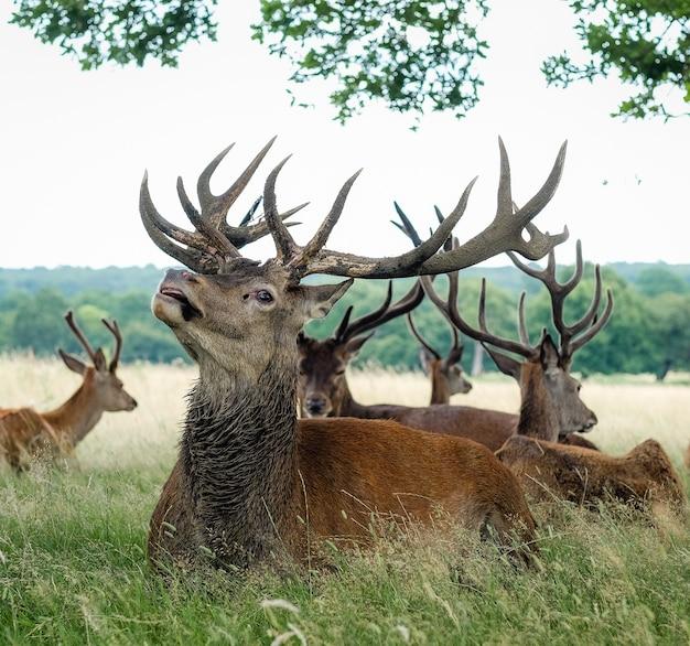 草に囲まれた畑に立つエルク 無料写真