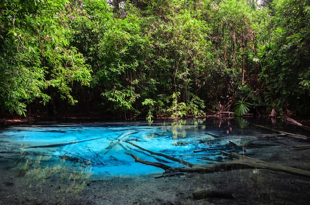 Emerald blue pool (sra morakot) in krabi province, thailand Premium Photo