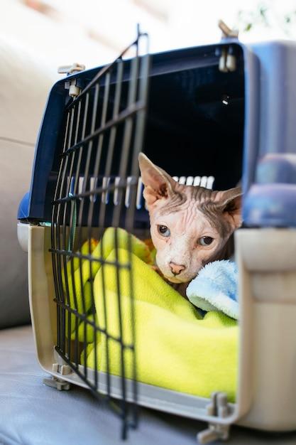 救急獣医クリニック。ペットの病気の症状を迅速に診断します。 Premium写真