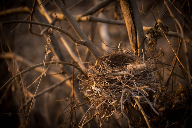An empty bird's nest on the branches of a tree close-up. Premium Photo