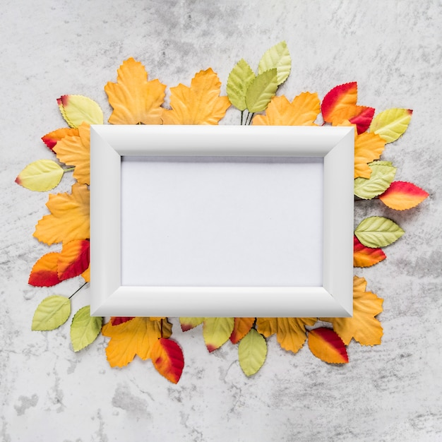 Empty frame on autumn leaves Free Photo