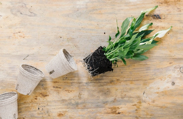 Empty peat pot and plant with soil on wooden background Free Photo