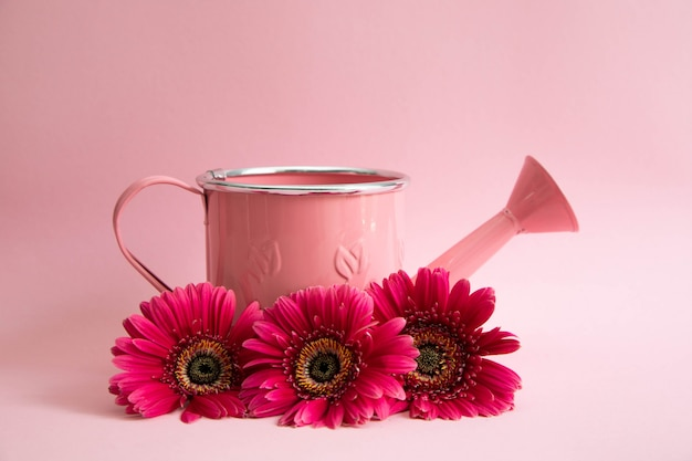 Empty pink watering can with three flowers of red gerberas Premium Photo