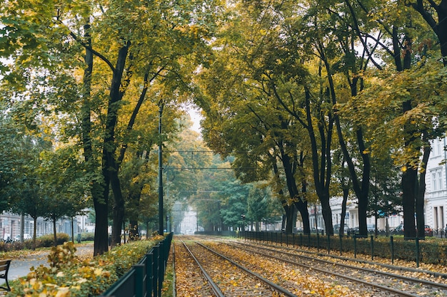 Empty railroad surrounded by green trees on the street Free Photo