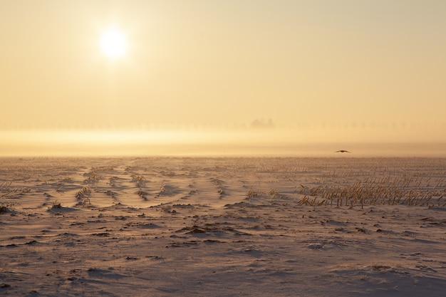 Campo nevoso vuoto con nebbia Foto Gratuite