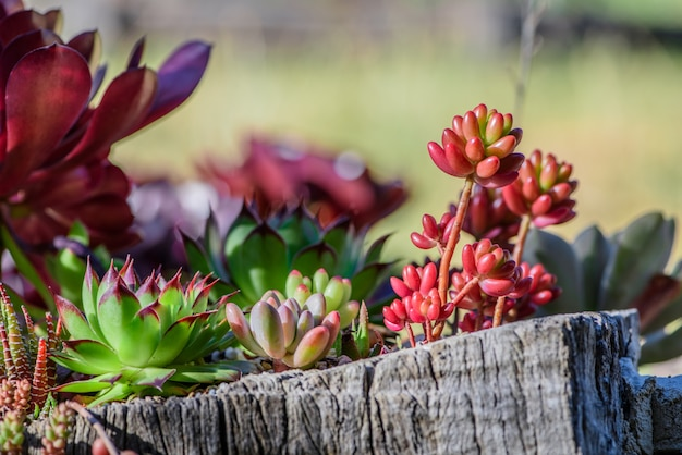 Energetic and succulent plant Free Photo