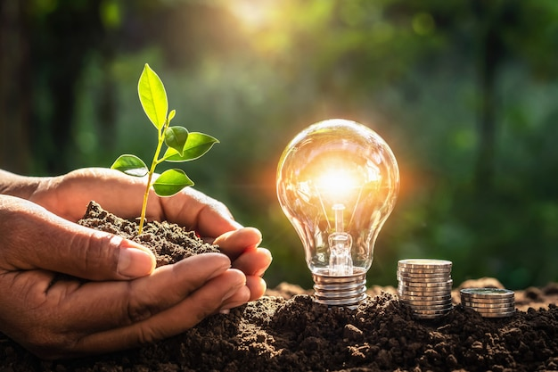 Energy concept. eco power. lightbulb with money and hand holding small tree Premium Photo