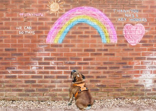英語のブルドッグが#stayhomeを読んで、nhsに敬意を表して虹の絵を見る Premium写真