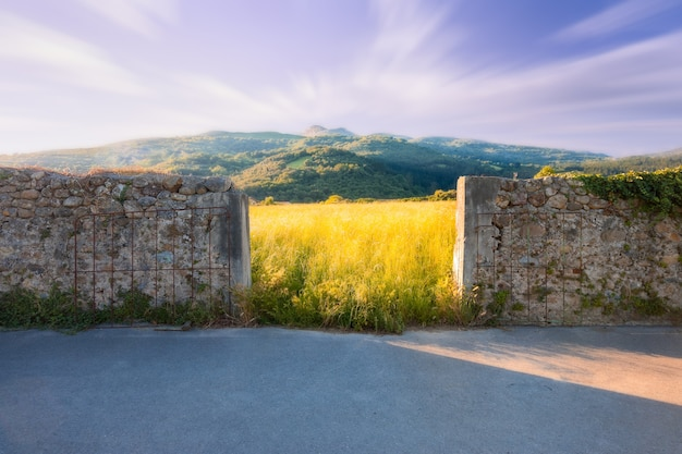 Entrance to a grass field at sunset Premium Photo