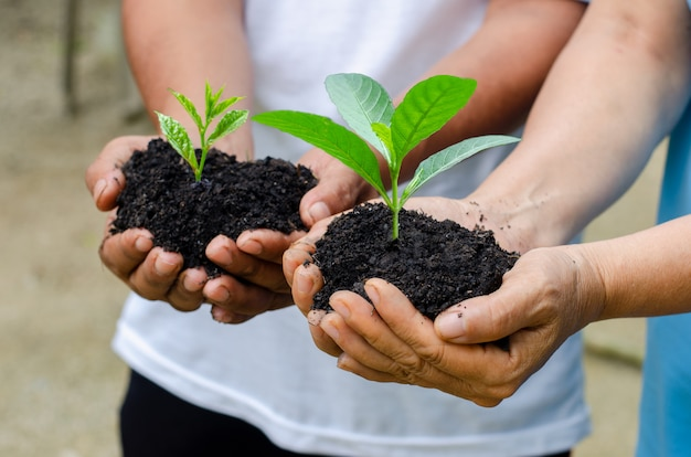 Environment earth day in the hands of trees growing seedlings Premium Photo