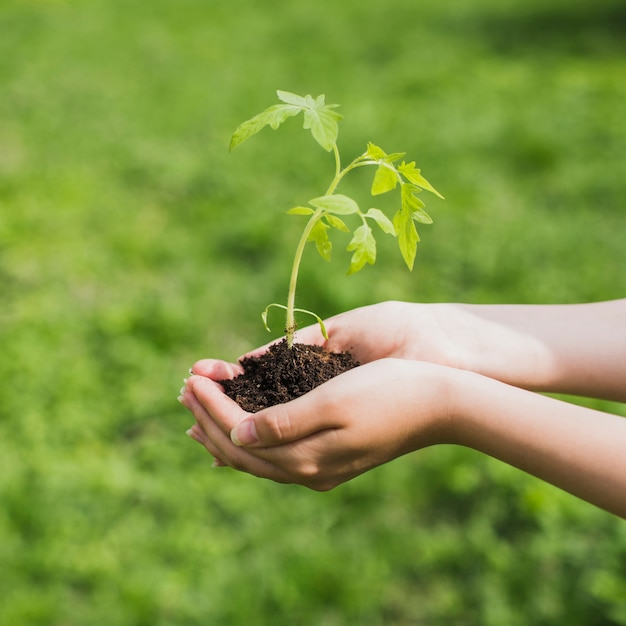 Environment and volunteer concept Free Photo