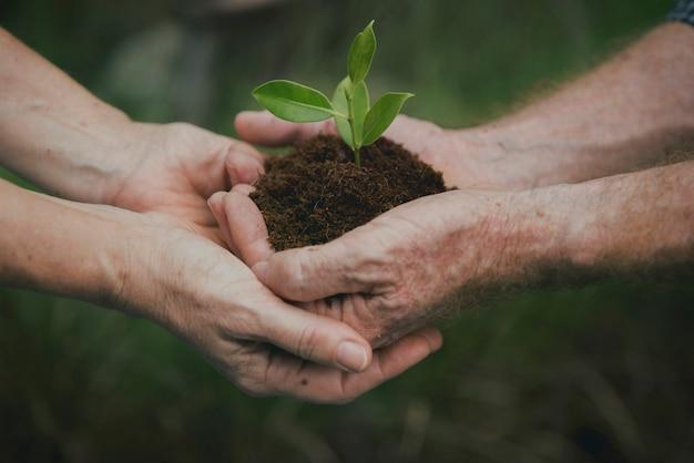 Environmental conservation plant sustainability Premium Photo