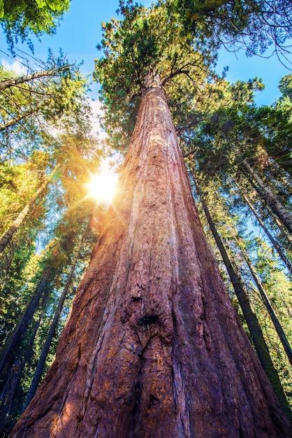 Epic sequoia place Free Photo