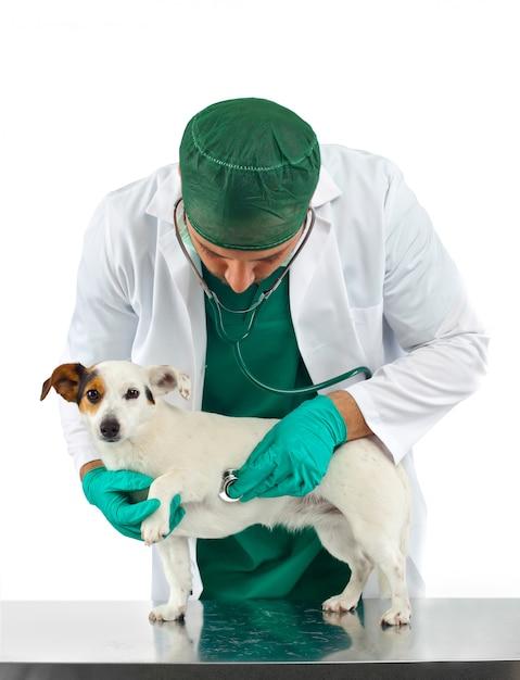 獣医esamica犬の心 Premium写真