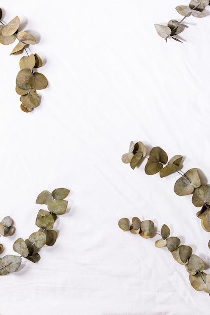 Eucalyptus branch round leaves over white cotton textile background. flat lay, copy space Premium Photo