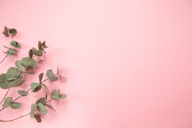 Eucalyptus branches on millennial pink background. flat lay. copy space. horizontal Premium Photo