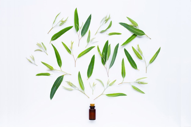 Eucalyptus essential oil bottle with  leaves on white. Premium Photo
