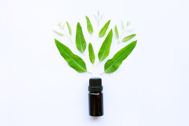 Eucalyptus essential oil on white Premium Photo