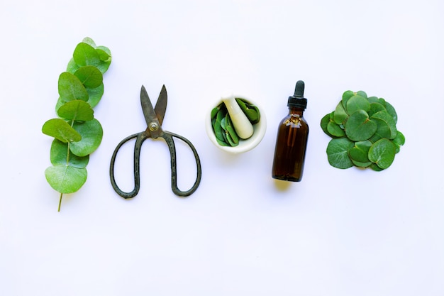 Eucalyptus essential oil with branch, leaves of eucalyptus and vintage scissors on white Premium Photo