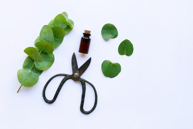 Eucalyptus essential oil with branch, leaves of eucalyptus and vintage scissors Premium Photo