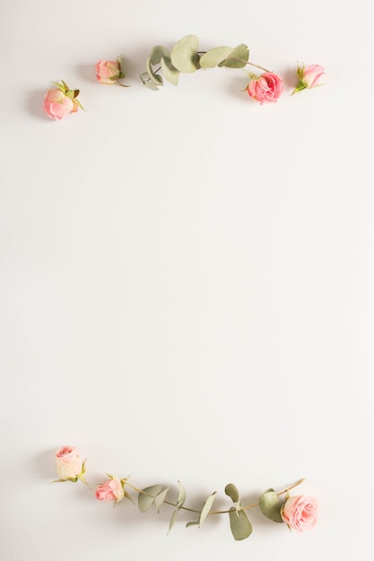 Eucalyptus leaves twig with pink rose buds on white backdrop Free Photo