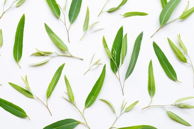 Eucalyptus leaves on white Premium Photo