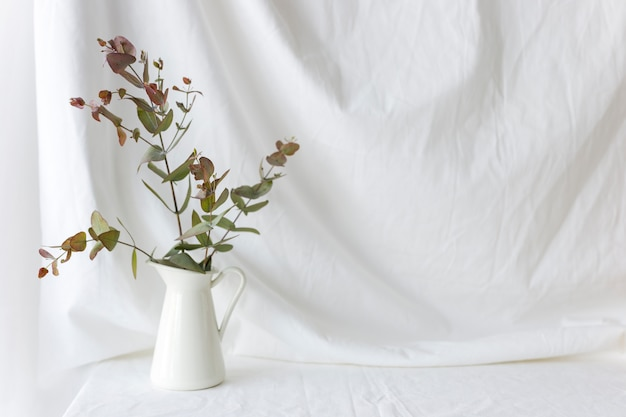 Eucalyptus populus branch in white ceramic vase over the white curtain backdrop Free Photo