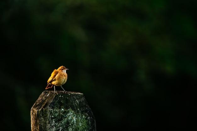 European robin standing on wood under the sunlight Free Photo