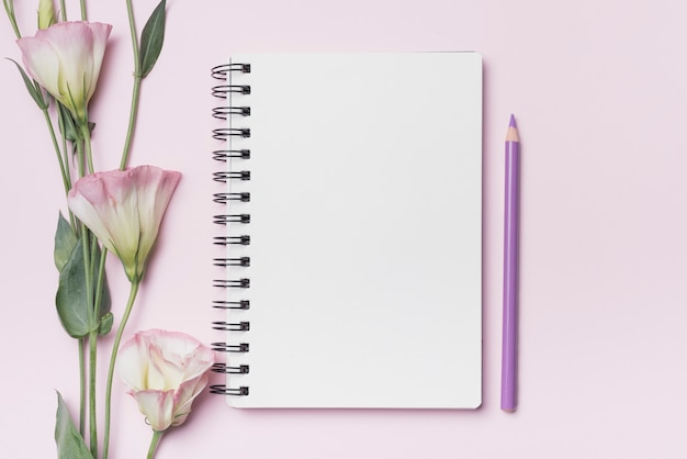 Eustoma flowers with blank spiral notebook with purple pencil against pink background Free Photo
