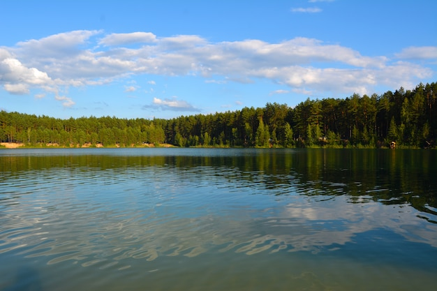 Evening on the lake in a pine forest. blue lakes in chernihiv region, ukraine Premium Photo